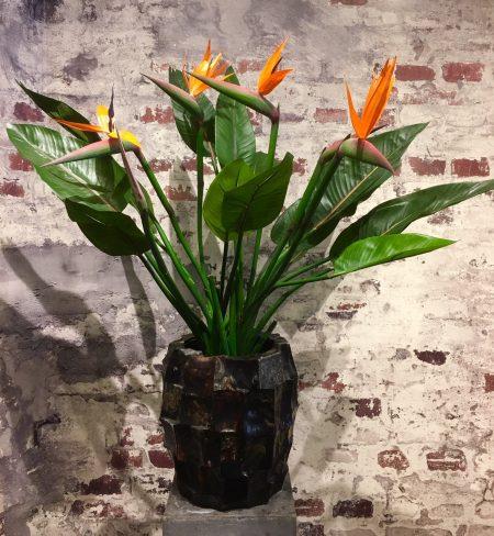 Twee zijde Strelitzia's in een parelmoer kunststof bak. H. 1 meter.